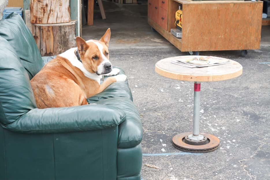 Kyle's dog relaxing on a sofa outside the workshop